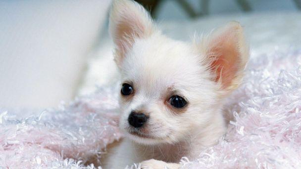 Zoznam majiteľov psov