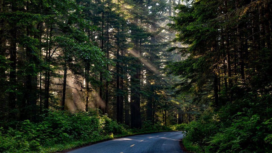 Výzva pre vlastníkov lesných pozemkov - Lesy SR, štátny podnik